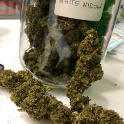 Cannabis Light White Widow