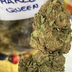 Cannabis Light Harley Queen