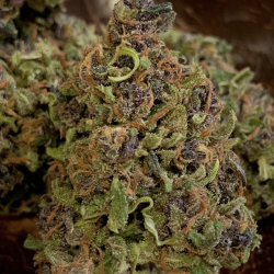 Cannabis Light Mimosa Haze